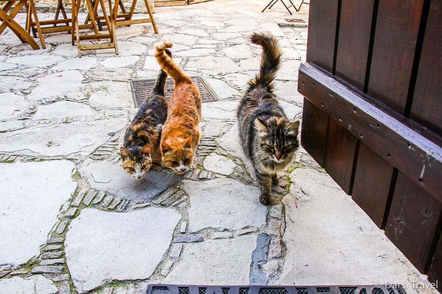 Деревня Лофу Кипр Бутик-отель Oinoessa Traditional Boutique Guest Houses Коты